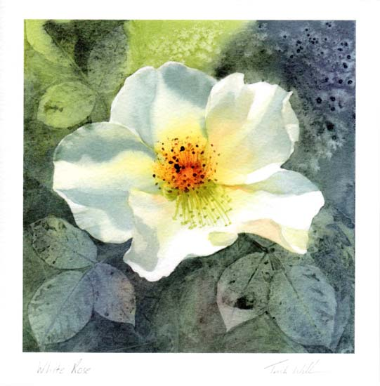 White Rose £75 framed